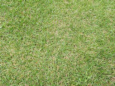 刈り上げたばかりの芝生アップ