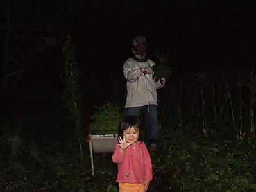 夕方、有機無農薬栽培の枝豆を収穫