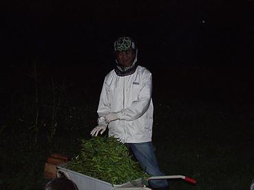 有機無農薬栽培の枝豆をこんなに収穫しました!