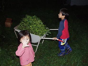 有機無農薬栽培の枝豆の収穫を子どもたちもお手伝い
