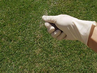 芝生の肥料まき2