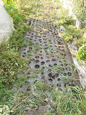 有機無農薬栽培のタマネギ収穫後の畑