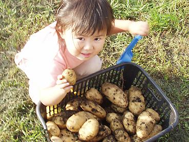 有機無農薬栽培のイモ掘り