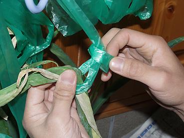 有機無農薬栽培の長ねぎ保存方法