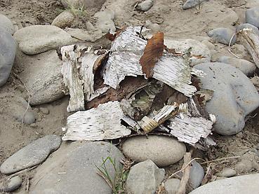 白樺の樹皮が天然の焚きつけ