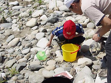 川の生物を観察