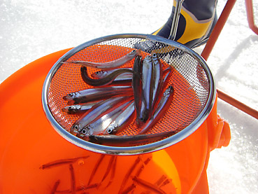 北海道・ホロカヤントーでのワカサギ釣り